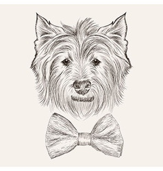 Sketchwest highland terrier with bow tie hand vector
