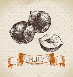 Hand drawn sketch nut vintage background vector