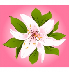 lily2 vector image