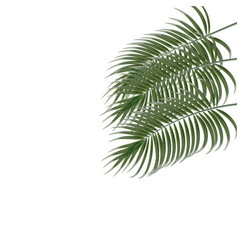 three tropical palm leaves isolated on white vector image