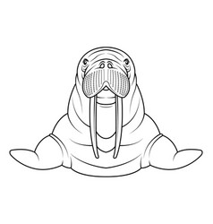 walrus coloriong page vector image