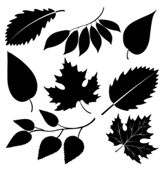 Black leaves silhouettes isolated on white vector image vector image