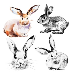 Set of easter rabbits vector