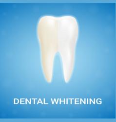 dental veneer teeth whitening whitening vector image vector image