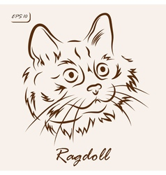 Ragdoll cat vector