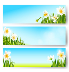 Spring nature background daffodil flowers vector