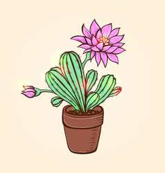 blooming pink cactus vector image vector image