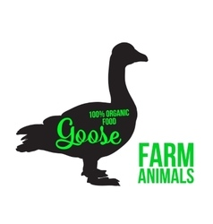Isolated farm goose on a white background vector