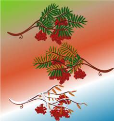 Rowanberry in seasons vector