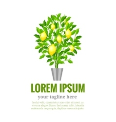 Lemon tree citrus tree garden fruit flat style vector