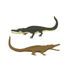 Cartoon green crocodile danger predator and vector