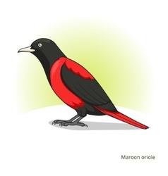 Maroon oriole bird educational game vector