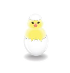 the newborn cute chicken on white background vector image