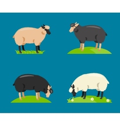 a cartoon sheep vector image