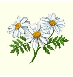 Daisy hand drawn painted vector