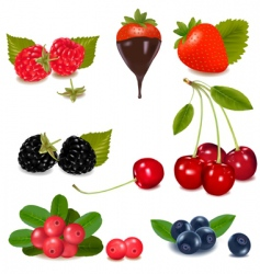 Group of berries and cherries vector