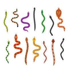 Flat snakes collection isolated on white vector
