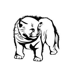 frightened kitten vector image vector image