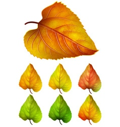 Collection of colorful autumn leaves - yellow vector
