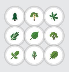 Flat icon natural set of jungle foliage acacia vector