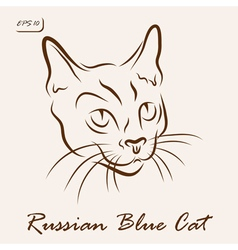 Russian blue cat vector