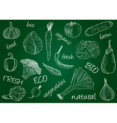 Vegetables doodles school board vector