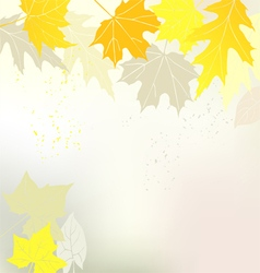 Autumn background yellow leaves vector