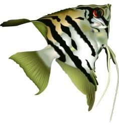 angelfish scalare vector image