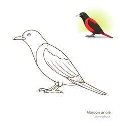 Maroon oriole bird coloring book vector