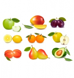 set of sweet fruit vector image vector image