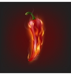 Burning chilli pepper vector