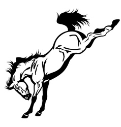 bucking horse black white vector image