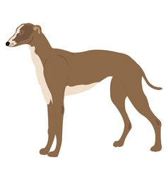greyhound vector image vector image