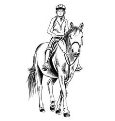 horse rider sketch vector image vector image
