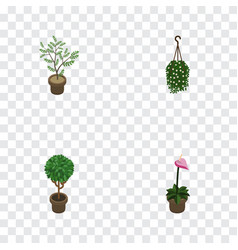 Isometric flower set of grower blossom fern and vector