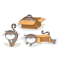 cat in box cartoon collection vector image