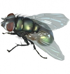 Blow fly vector