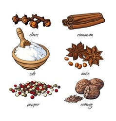 Set of spices - cinnamon pepper anise nutmeg vector