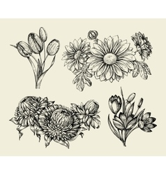 Flowers hand drawn sketch flower tulip astra vector