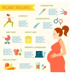Pregnancy infographic set vector