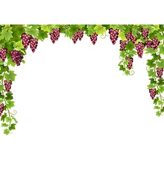 Red grape floral frame vector