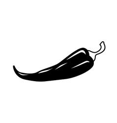 Chilli pepper icon vector
