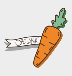 Fresh carrot organ vegetable with ribbon vector