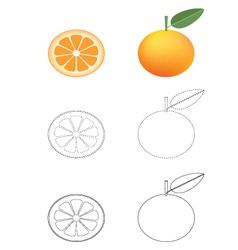 Oranges coloring pages vector