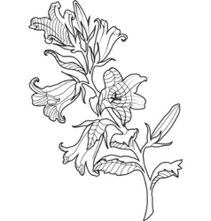 Cornflower engraved vector