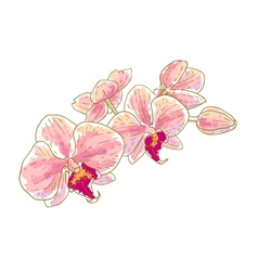 Branch of orchids vector image vector image