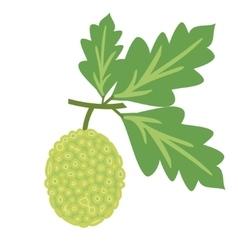 Breadfruit vector image vector image