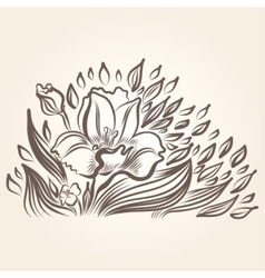 Drawing of beautiful narcissus flower vector