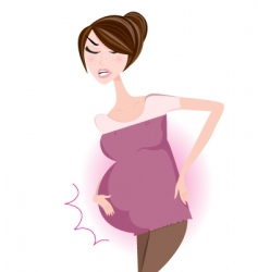 pregnant woman vector image vector image
