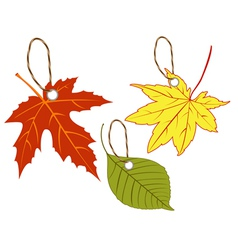 Labels of autumn leaves vector image